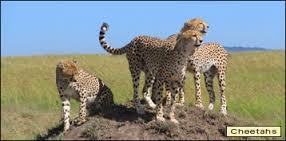 Lake Manyara - Serengeti Camping Safari Photos