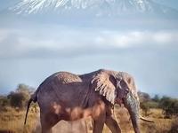 5 Days Trekking Kilimanjaro - Marangu Route