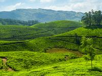 Kerala Monsoon Celebration