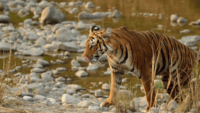Things To Do Jim Corbett Tiger Reserve