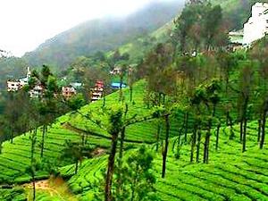 Cochin - Munnar - Thekkady - Alleppey Houseboat - Cochin