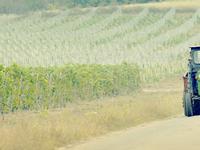 Samburesti Vineyard