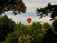 Mara Leisure Camp Baloon Safaris Lo