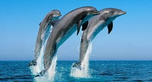 Whale & Dolphin Watching in Sri Lanka Photos