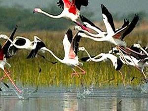 Agra Bharatpur - Heritage & Wildlife Tour Fotos