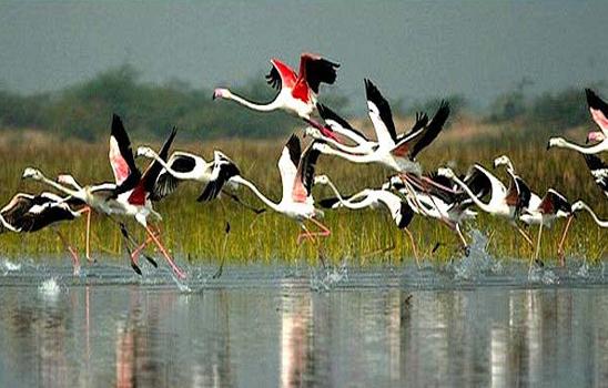 Agra Bharatpur - Heritage & Wildlife Tour Photos