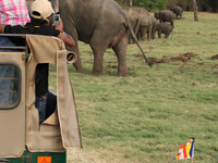 Minneriya Jeep Safari