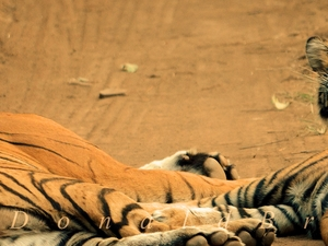 Ranthambore Special Photos