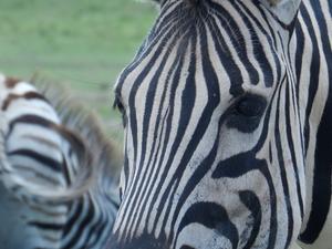 6 Day Luxury Safari Garden Route Photos
