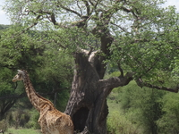 6 Days Tanzania Budget camping safari;