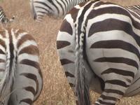 2010 07 26 Masai Mara 042
