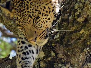 Classic Northern Tanzania Safari Photos