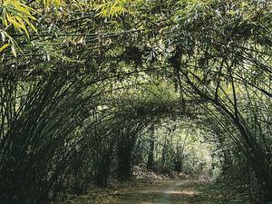 Jungle & Adventure Photos