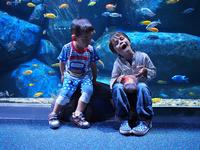 Singapore Aquarium   Kids Enjoying