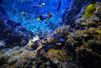 Singapore S E A  Aquarium