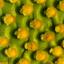 Cactus Detail Xl