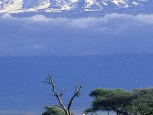 Wild Tanzania Photos