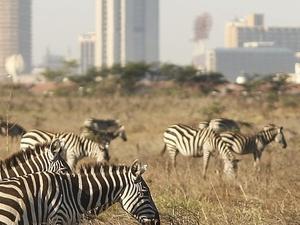 Spectacular Kenya Beach & Bush Safari Holiday Fotos