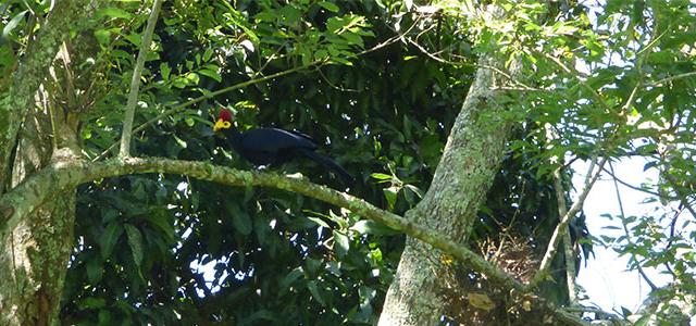 Mabira Forest Birding Tour Photos
