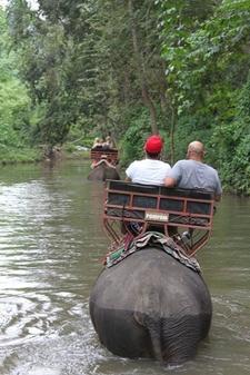 Jungle Safari...