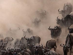 7 Days Highlights of Kenya Safari