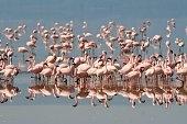 Flamingos Manyara