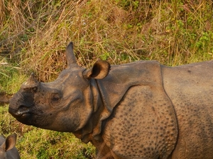 Chitwan Jungle Safari 2 Nights 3 Days