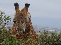 Masaimara Budget Safari