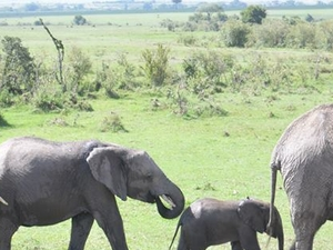 7 Days Samburu Lake Nakuru Masai Mara Budget Camping Safari