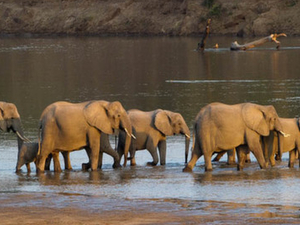 3 Day Kruger National Park Safari At Kapama River Lodge Fotos