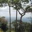 Tree Preah Vihear