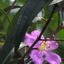 Plant 2 Koh Rong