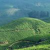 Kerala Luxury Trip