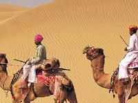 Desert Camel Sahara