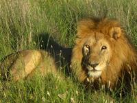 14 Days Safari With The Big 5 And Tropical Zanzibar