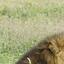 Mzava Safaris