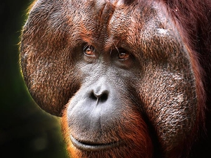 10% Off Orangutan Tour in Borneo