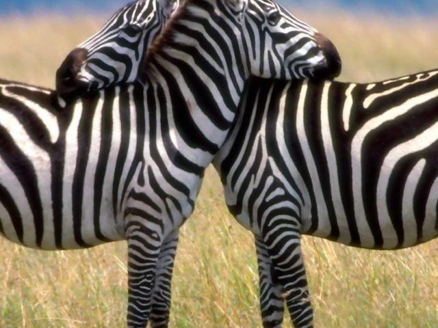 Walking Culture Tour and Wildlife Safaris Photos