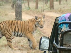 Temples & Tiger