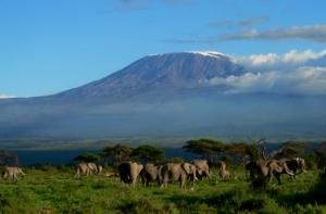 Classic Kenya Safari Fotos