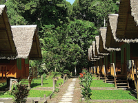 Eco Amazonia 8