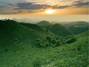 Tea Plantation + Xianggong Hill + Ancient Stone Village Fotos