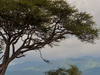 East Africa Tailor-Made Tours and Safaris