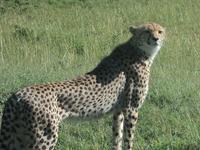 Budget Masai Mara Safari in Kenya