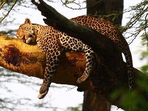 Explore Kenya