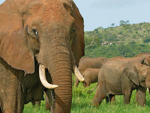 One Day Budget Safari to Arusha National Park Photos