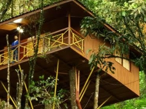 Munnar Tree House Fotos