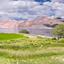 Grass Field In Pangong Lake