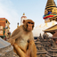 Sitting Monkey On Swayambhunath Stupa In Kathmandu Nepal