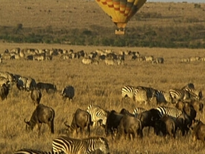 Home Coming Offer - Maasai Mara